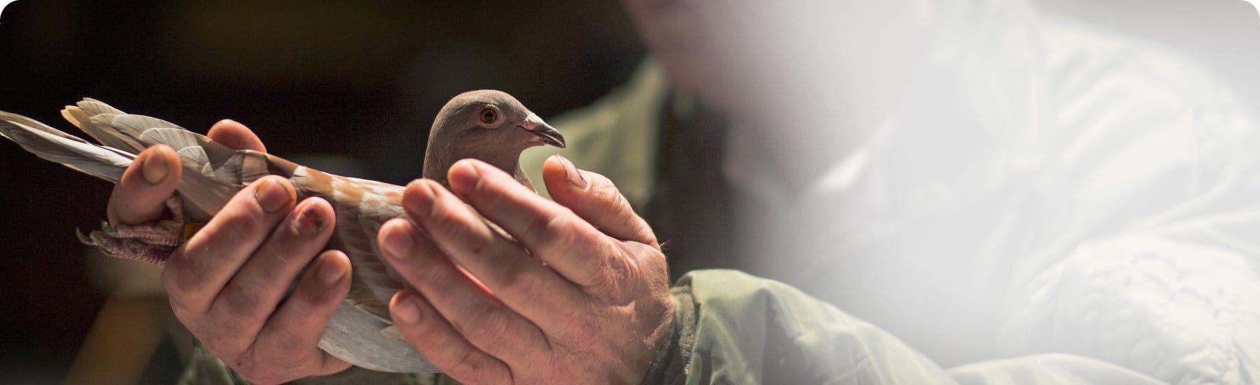 Bird Plumage