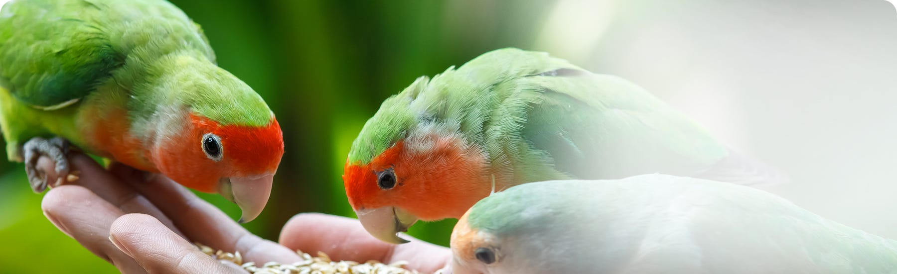 Veterinary medicines for birds