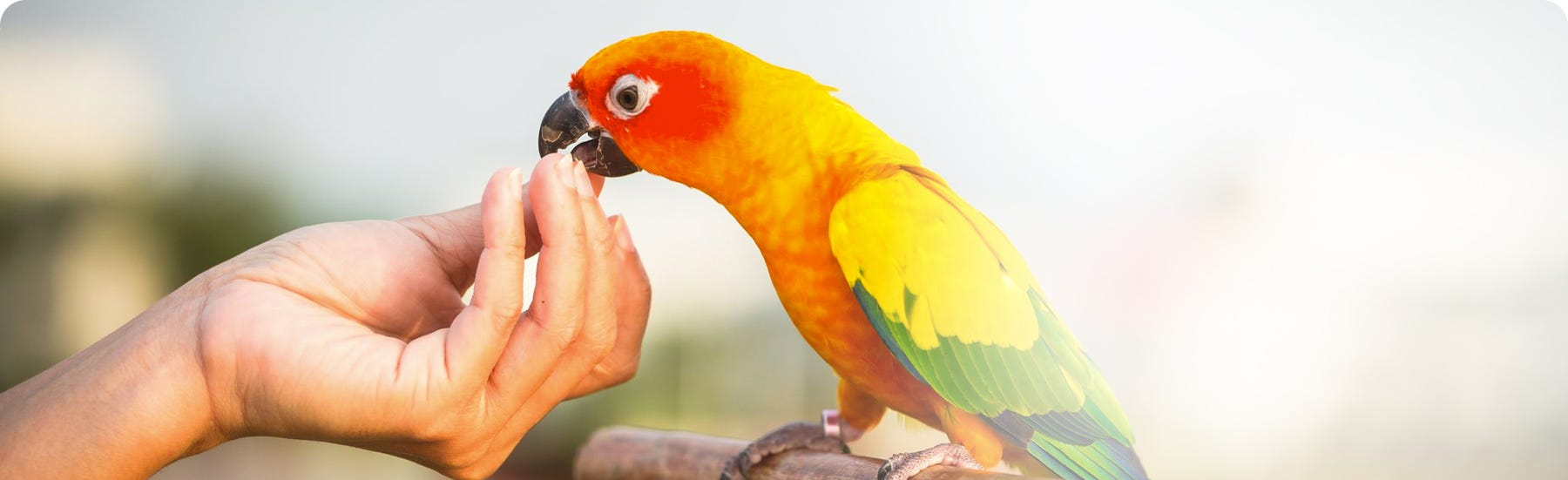 Vitamins and minerals for birds