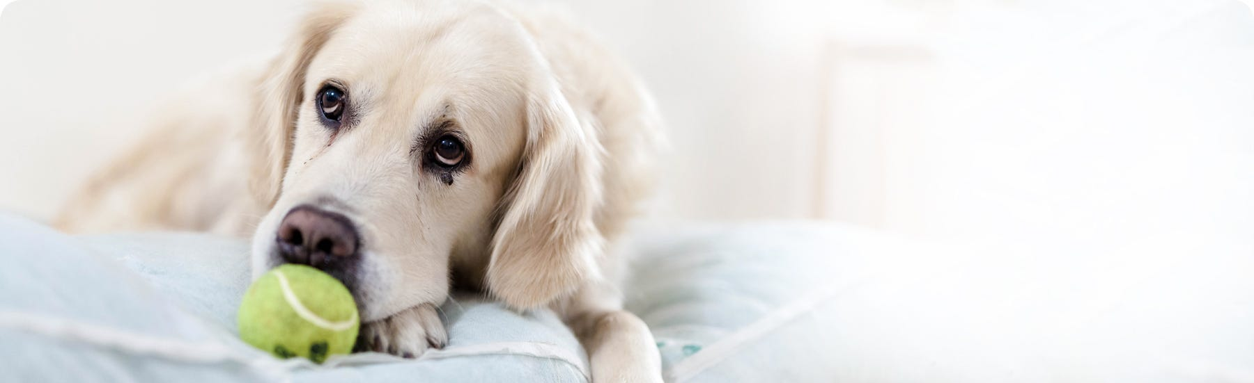 Condition specific food for dogs