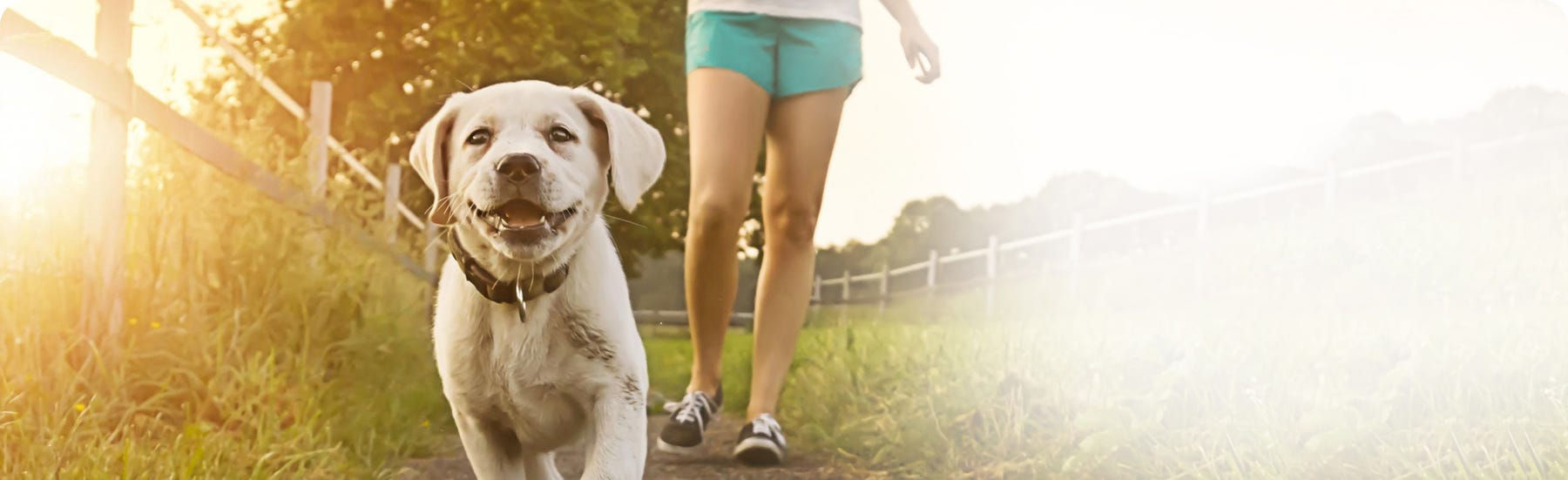 Walking and travel with your dogs