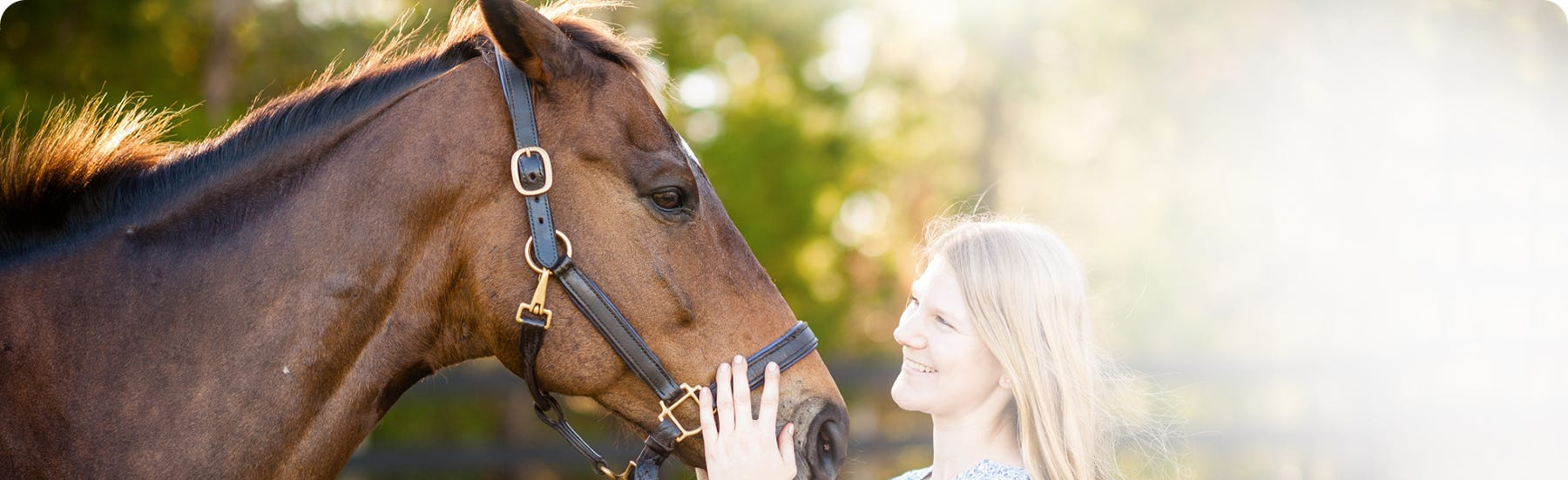 Calming for horses