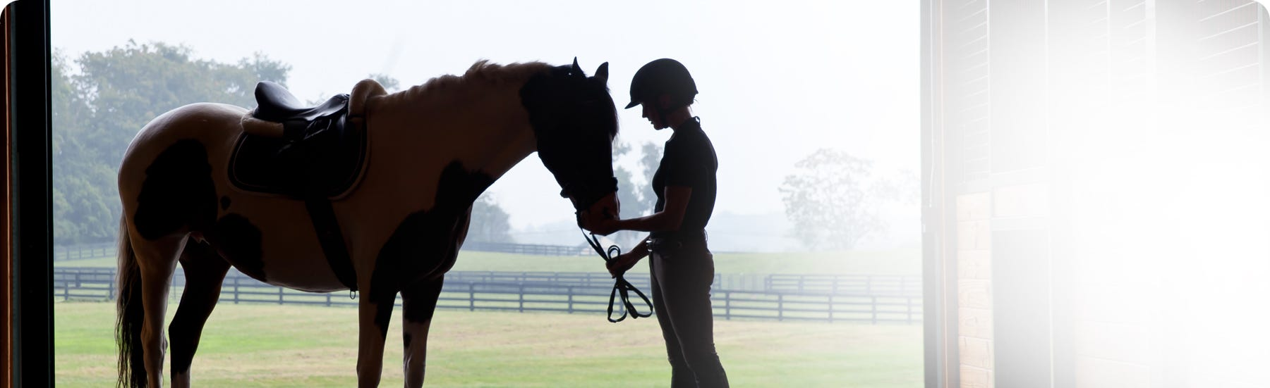 Respiratory conditions for horses