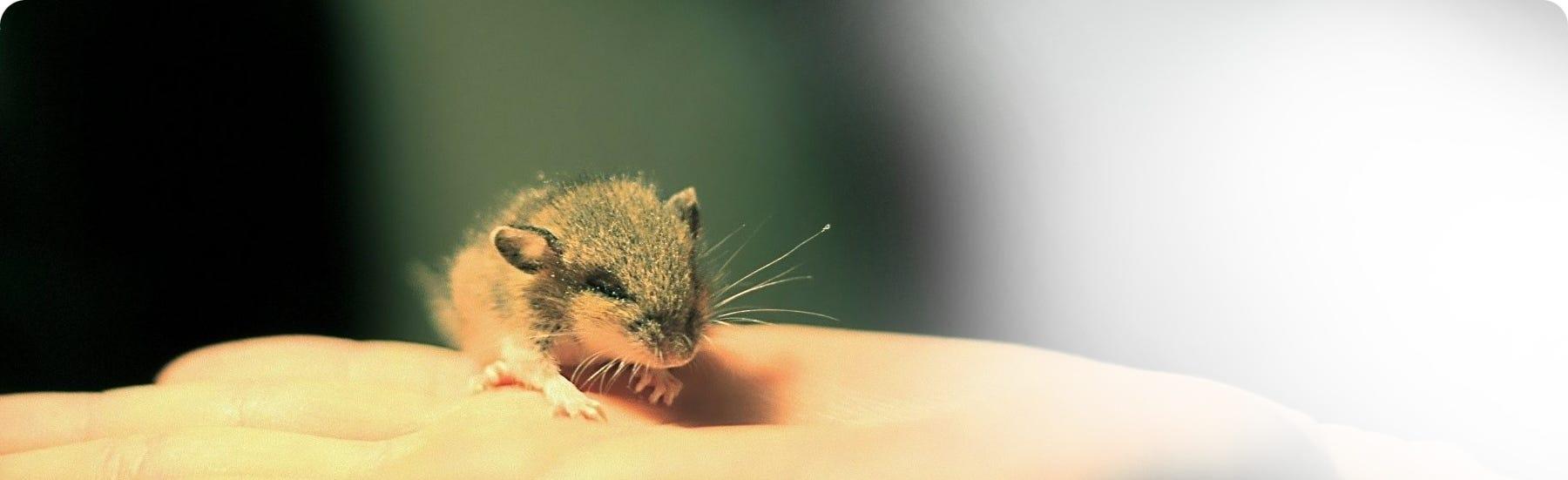 Mouse & Rat foods