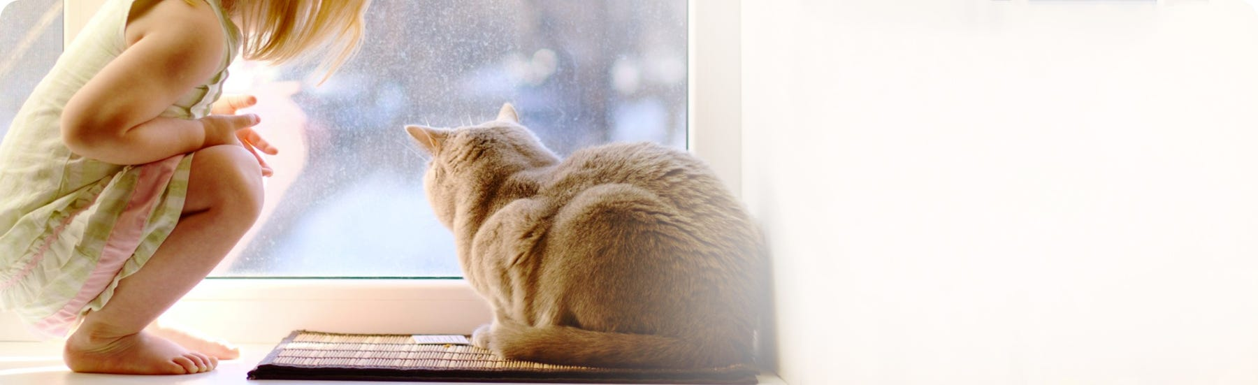 Cat stress, calming and anxiety