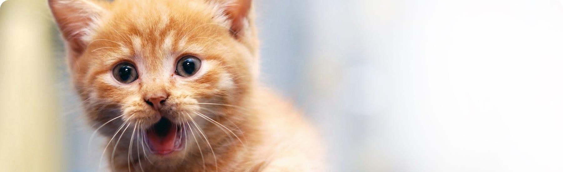 Cat eyes, ears and teeth