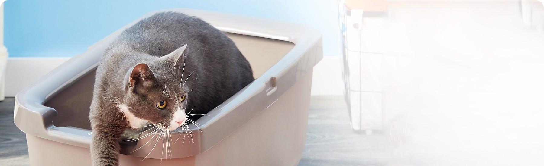 Cat Litter Range