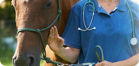 Horse Prescriptions